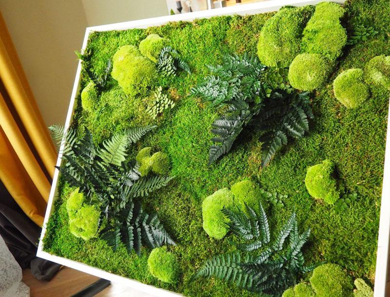 Зеленые картины из мха – очень оригинальное решение