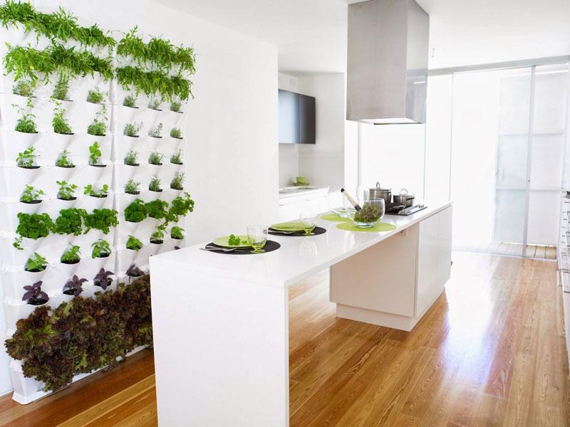 Пряные травы – материал для зелёной стены на кухне