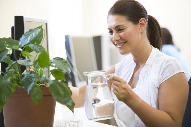 Если композиция состоит из цветов в горшках, можно поливать и вручную, главное – регулярно