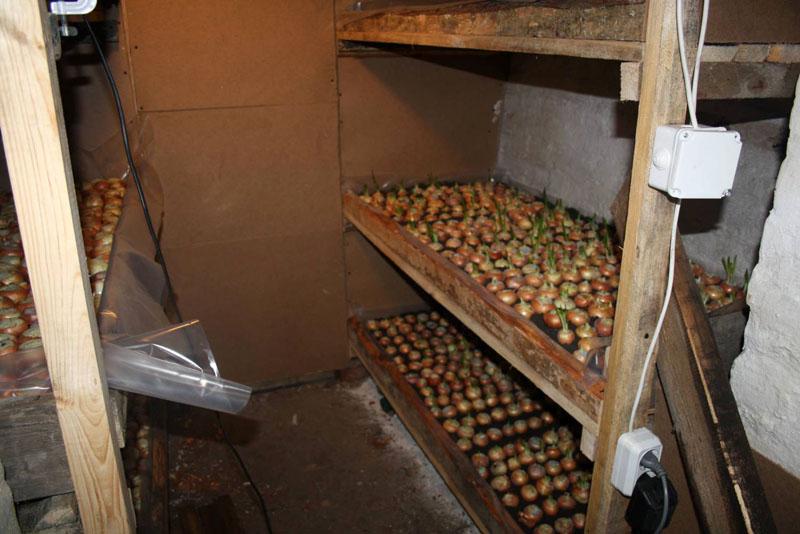 Некоторые используют подвалы гаражей для выращивания зелени. Здесь понадобится очень хорошее освещение