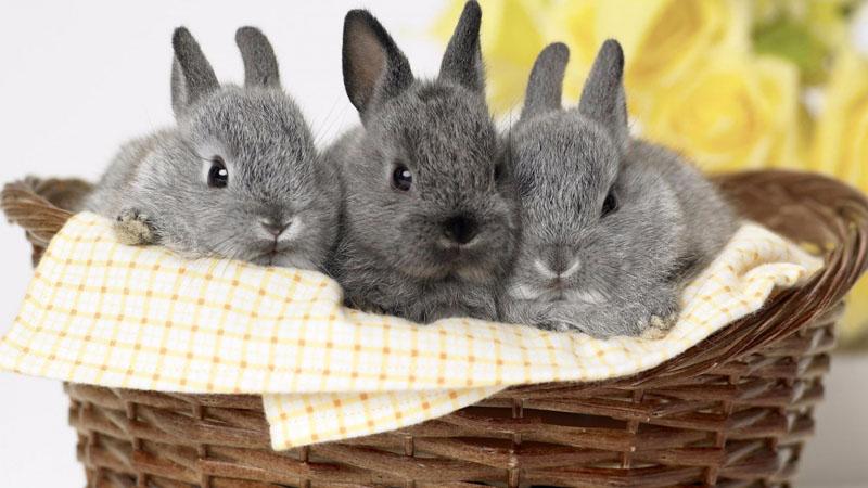 Клетка для кроликов своими руками: пошаговая инструкция