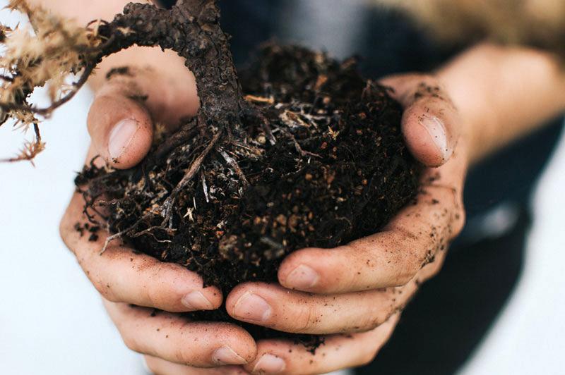 Компост помогает растению получать необходимые питательные вещества из почвы