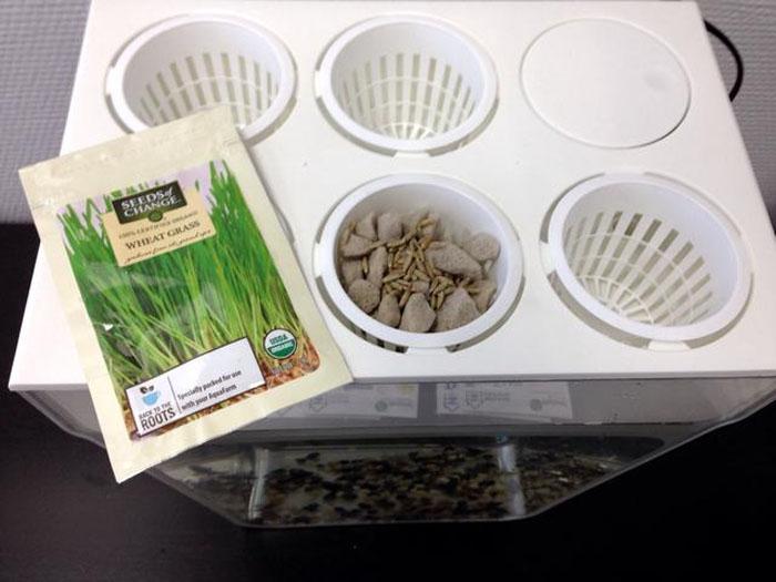 Выращивать рекомендуется травы и зелень, но кто мешает немного поэксперементировать?