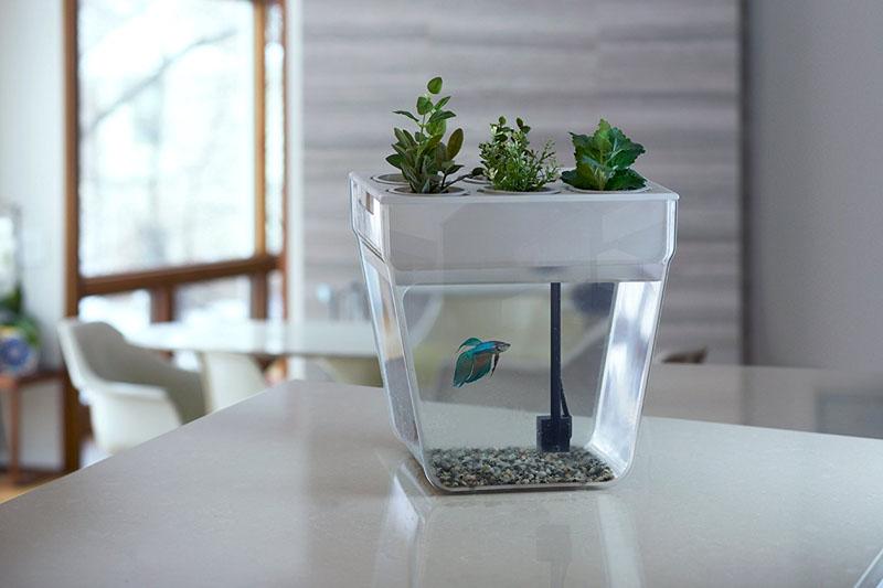 Самоочищающиеся аквариумы (аквафермы)