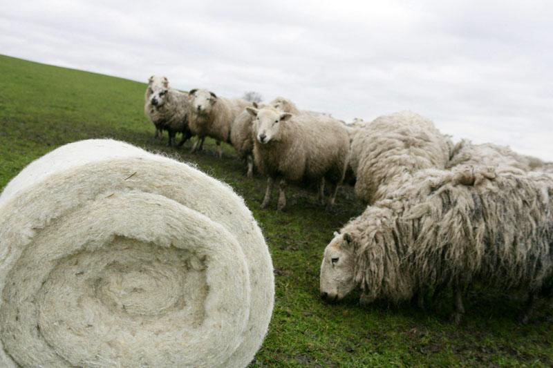 Утеплители на основе овечьей шерсти