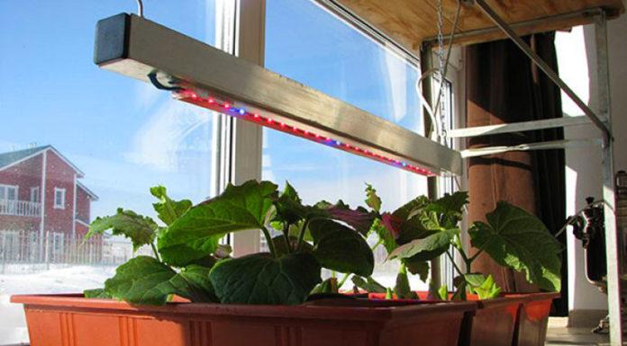 🍅Зимние теплицы в квартире: 5 лучших способов увеличения урожайности
