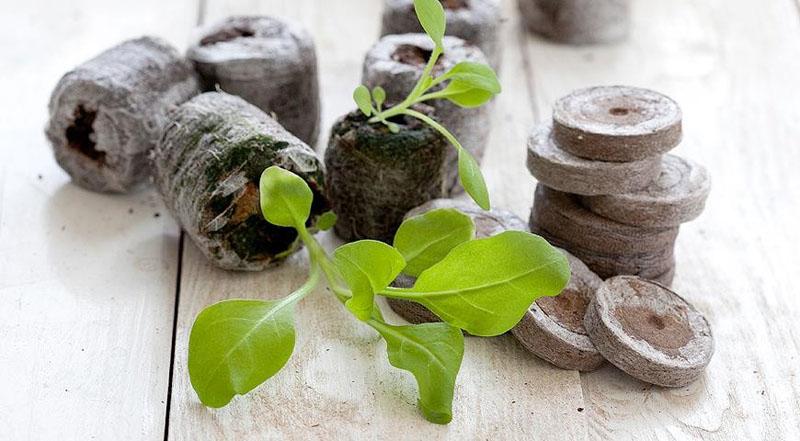 Вместо грунта можно использовать для проращивания торфяные таблетки