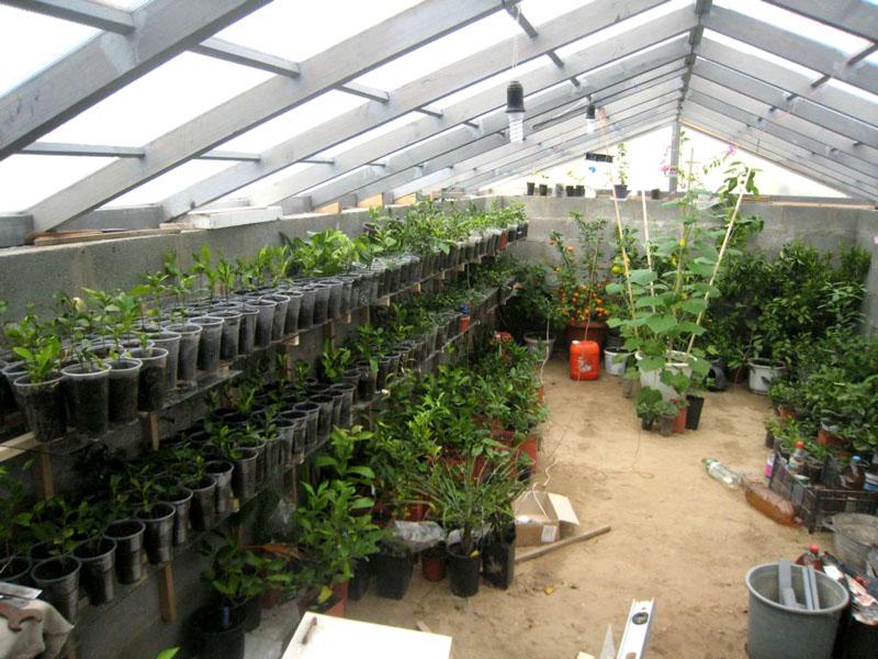 Для лучшего роста растений нужно много света