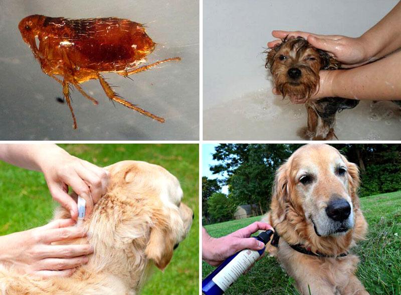 Спасти животное от укусов можно и нужно