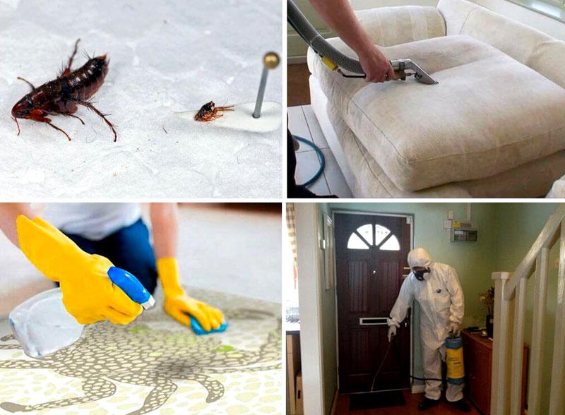 Получается, что этажность не спасает от насекомых