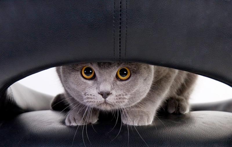 Котёнок непременно сядет ещё раз в то место, которое обработали ароматизатором