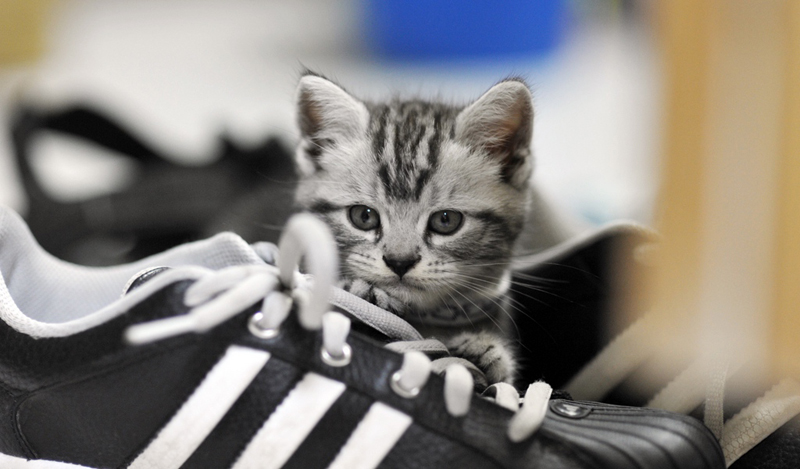 Котята могут мстить хозяевам и ставить метки на обуви