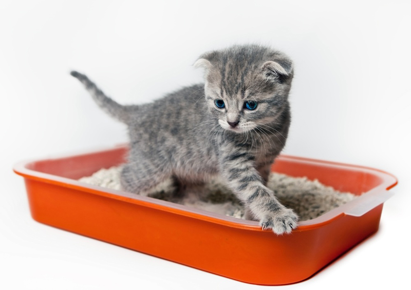 Лоток должен быть удобным для котёнка