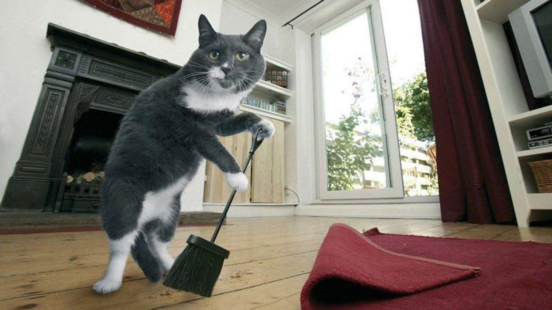 Котёнок должен закопать свои дела