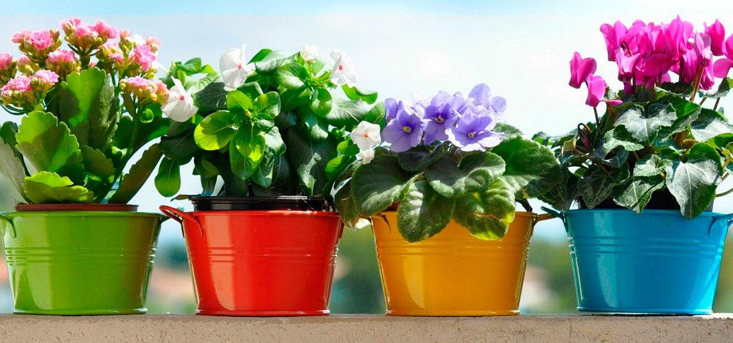 Комнатные домашние растения и цветы: фото и названия