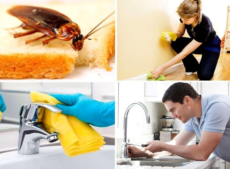 Перед тем, как начать обработку квартиры, нужно полностью убрать все продукты питания, починить краны, на ночь насухо вытирать все поверхности, поскольку вода для тараканов – источник жизни