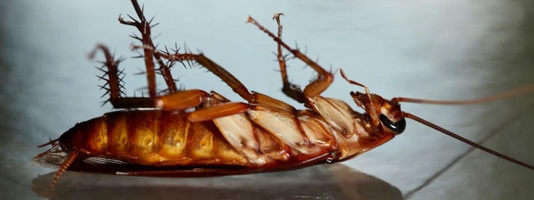 Самый эффективный препарат от тараканов