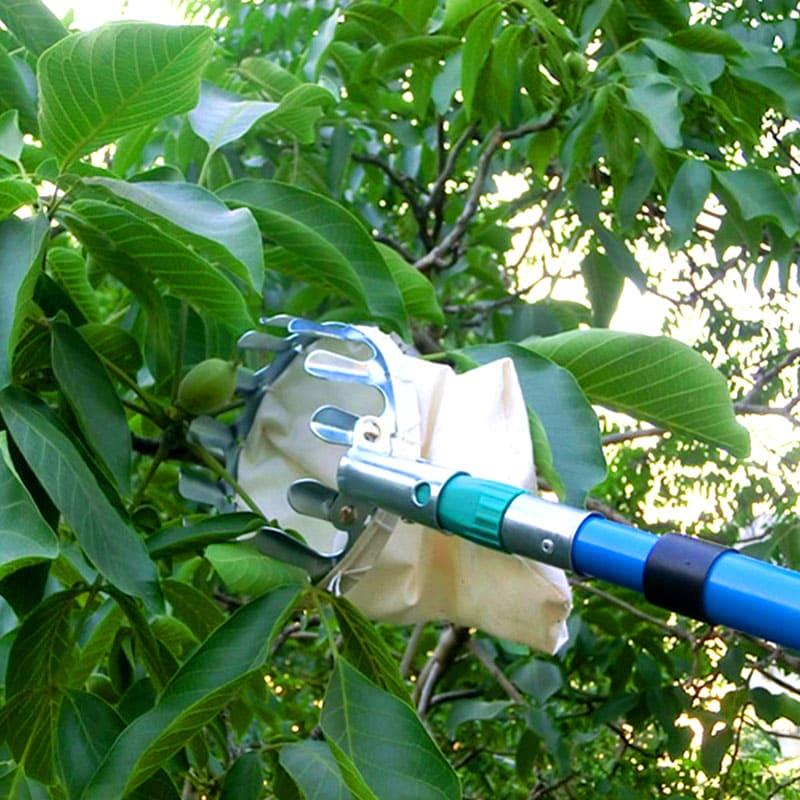 Корона зубчиков плодосъёмника позволяет легко оторвать плод от ветки