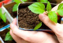 Товары для выращивания рассады