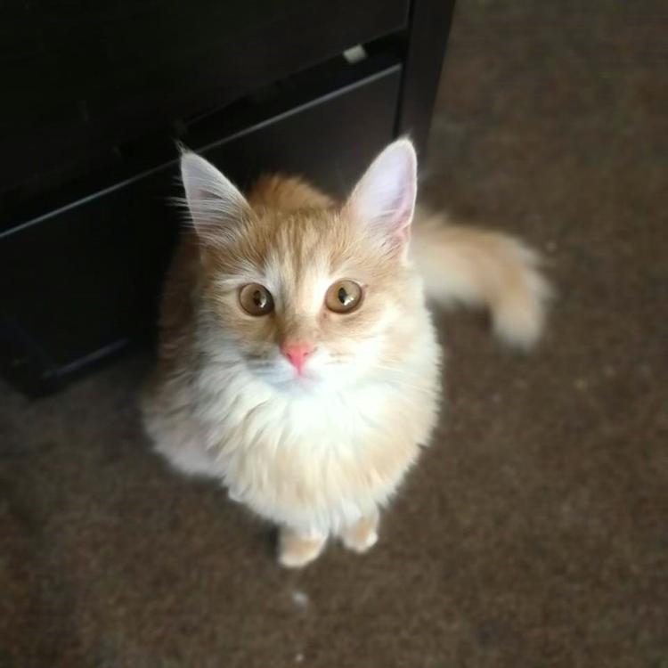 Очаровательная кошка Марго, добрая и любопытная