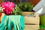 Цветочные вазы и идеи для оформления сада от AliExpress: необычные решения для создания зелёной зоны