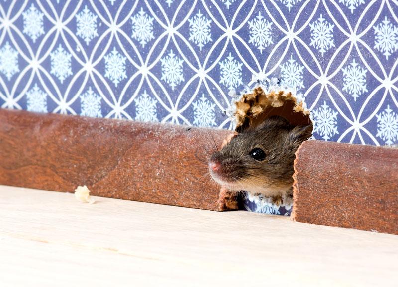 Маленькая мышь просочится через самую крохотную щель