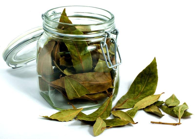 Запах лавровых листьев, вымоченных в уксусе и нашатыре, заставит мышей обходить участок стороной