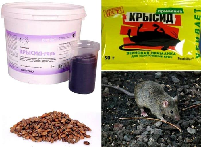 Воздействие «Крысида» на мышь