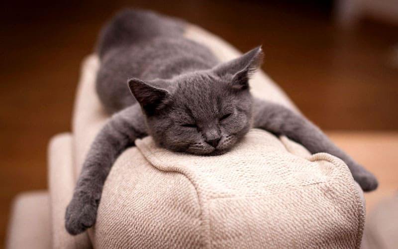 Для дома, где обитают собаки и кошки, не стоит приобретать тонкие покрывала из шёлка или сатина. Они слишком неустойчивы к воздействию когтей