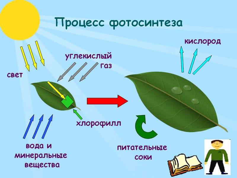 Новые шторы работают по принципу фотосинтеза у растений