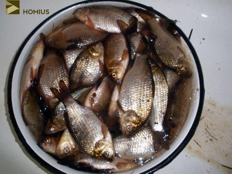 Каково же было наше удивление, когда рыба на утро оказалась не просто живой, а очень даже активной. И это при том, что караси как минимум 40 минут ехали в машине в пакете вообще без воды!