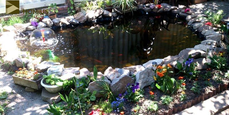 Разве что только то, что маленький пруд изменил микроклимат в моем саду. Вокруг него отлично растут цветы