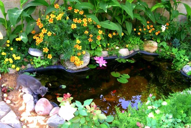 Берега чаши выложить камнем и высадить растения