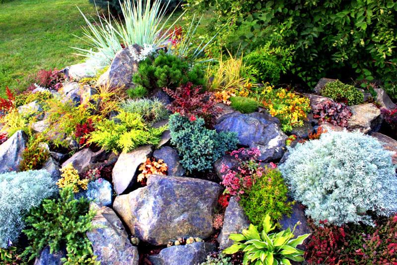 С ранней весны и до августа растения нуждаются в периодической подкормке