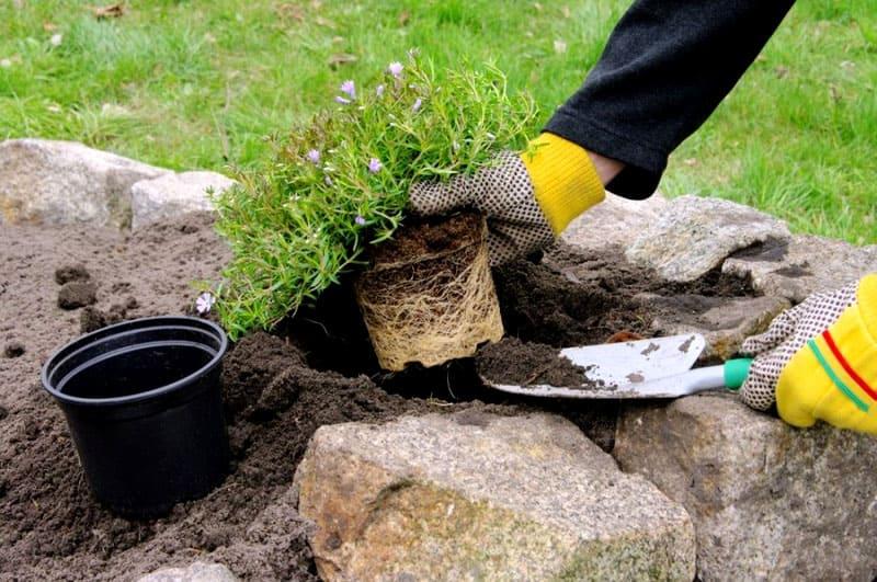 После укладки грунта можно приступать к высадке растений