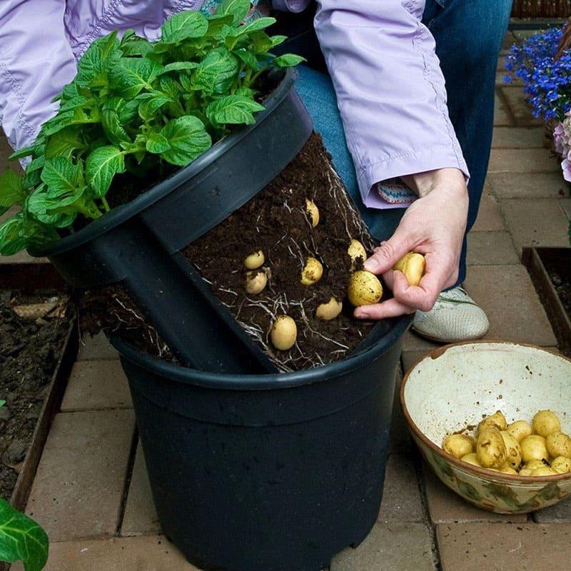 Вот такая удобная посуда создаст клубню необходимую температуру, затемнит посадку и позволит без труда собрать урожай