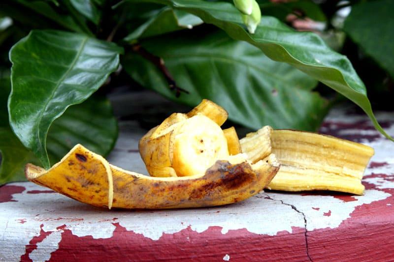 Банановая кожура – питательный коктейль для вашего сада: она содержит кальций, магний, сера, фосфаты, калий и натрий