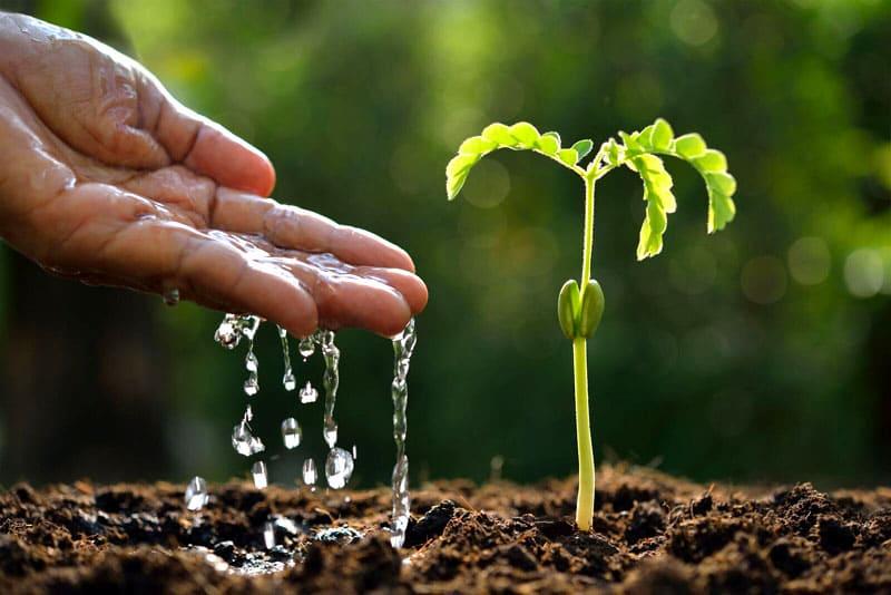 Такой лайфхак позволит обеспечить пассивный полив растению