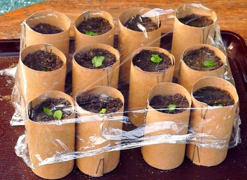 Прелесть этих горшочков в том, что не нужно доставать растения из импровизированных горшочков. Можно сажать растения вместе с втулками