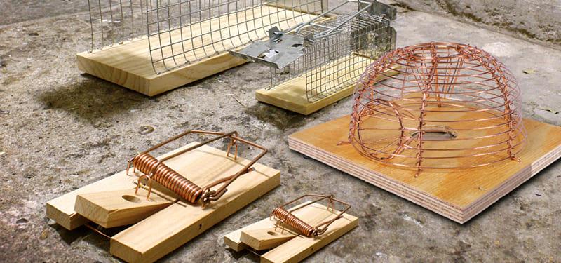 Варианты ловушек из дерева и металлической проволоки