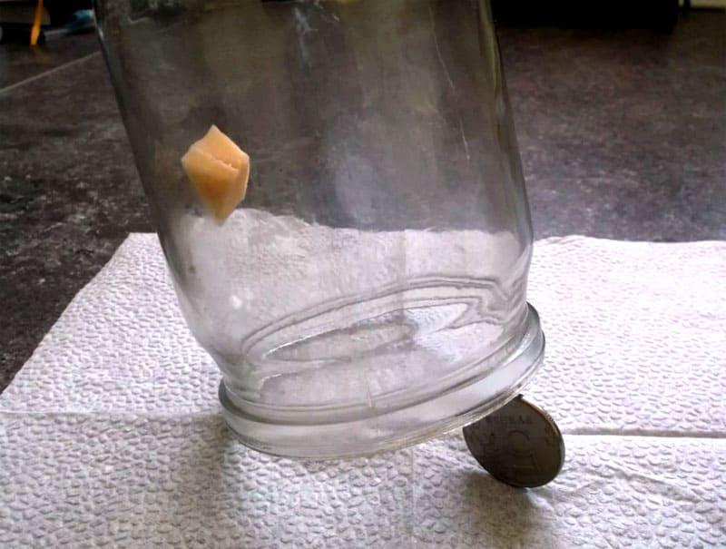 Единственный минус такой конструкции в том, что внутрь может попасть только одна мышка