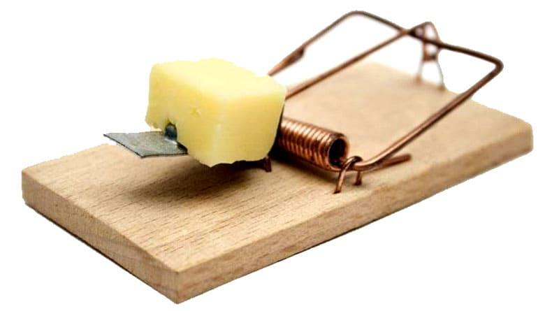 Когда мышь попытается снять приманку, сработает фиксатор и пружинка пригвоздит грызуна к бруску
