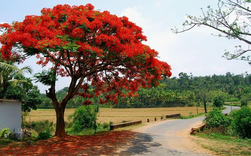 Даже одно дерево может иметь разную степень прочности, если оно растёт в условиях высокой или низкой влажности
