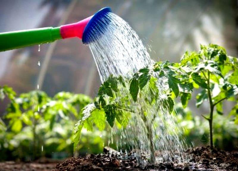 ФОТО: sovrusadba.ru Редкий, но обильный полив – залог хорошего урожая