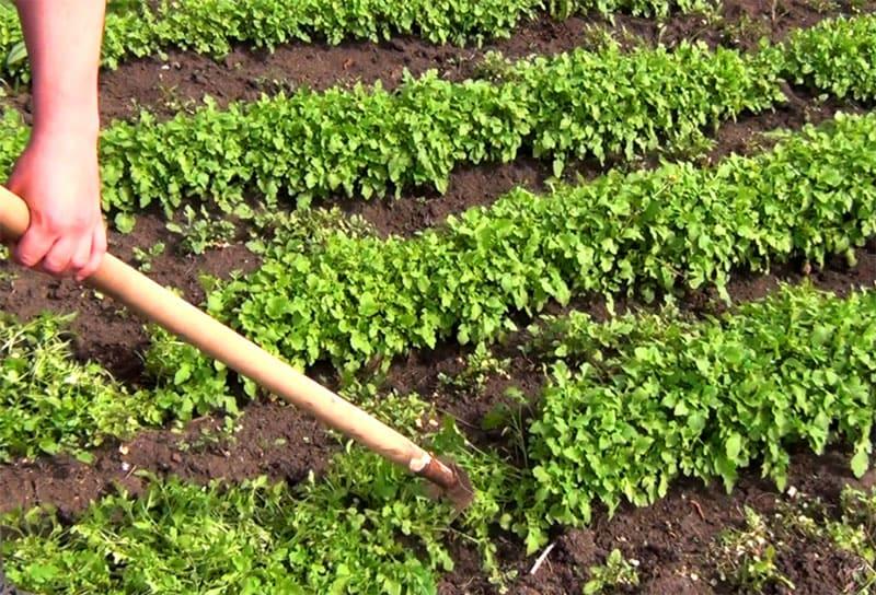 ФОТО: teplica-exp.ru Периодически давайте земле отдохнуть, она в благодарность порадует вас отличными урожаями