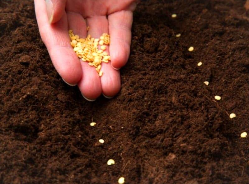 ФОТО: fermoved.ru Контролируйте количество семян во время посадки