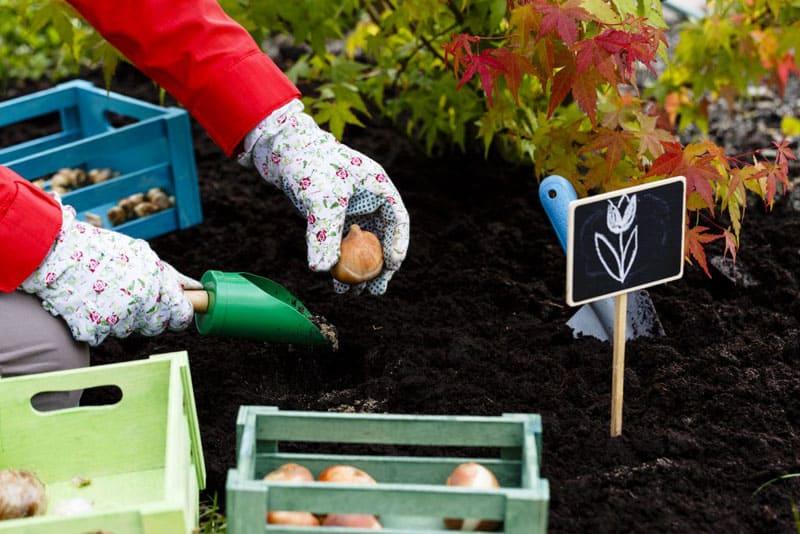 ФОТО: fermoved.ru Для таких растений важно учесть их требовательность к свету, теплу и влаге. Именно от этого зависит их полноценный жизненный цикл
