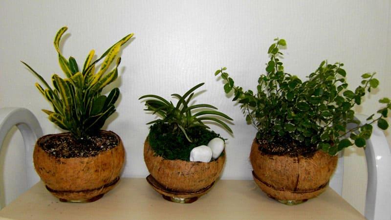 Однако, из-за быстрого пересыхания земли поливать растения нужно каждый день
