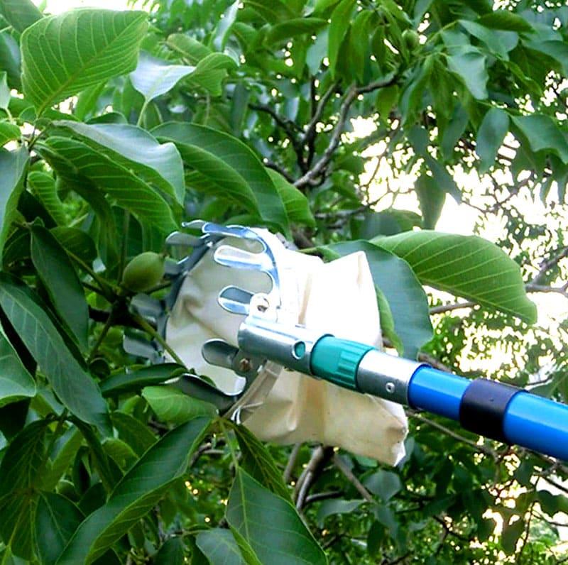 Кроме того, фрукты больше не станут падать, пачкаясь и сминая себе бока, а будут попадать сразу в удобный пакет глубиной в 20 см