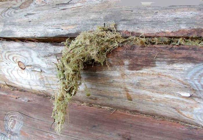 Мастера предлагают использовать обычный лесной мох